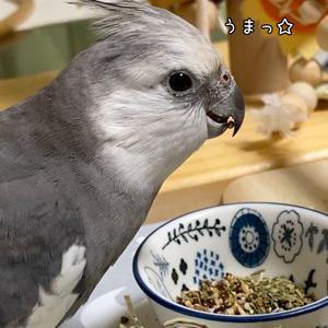 *1550 賢く美味しく、食欲の秋☆