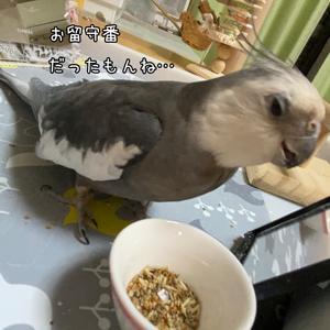 *1817 鳥獣日和