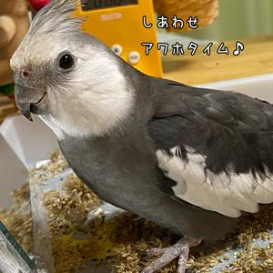 *1881 憧れキラキラ☆