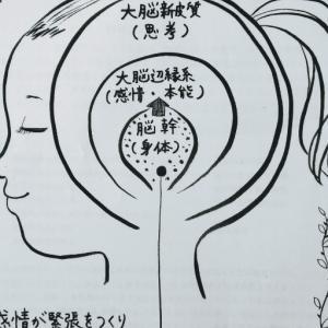 4度目の脳ケアのご感想│ 心と体の無意識に働きかける八戸ナチュラルソウル
