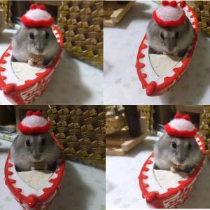 ミルのサンタ帽子