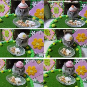 ミルちゃんの春の帽子♪