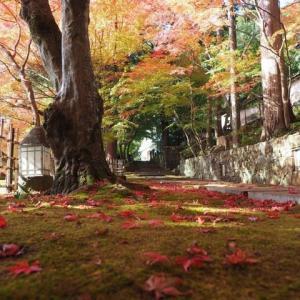 紅葉のある風景その2@2019/11/17 。。。