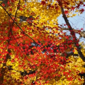 紅葉のある風景その3@2019/11/17 。。。