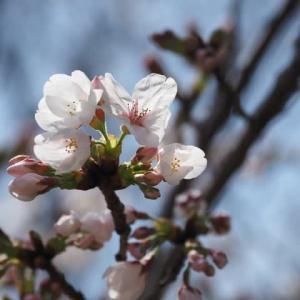 花のある風景@2020/03/29 。。。