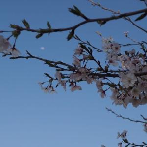 花のある風景@2020/04/04 。。。