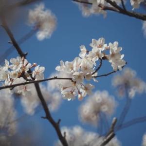 花のある風景@2020/04/05 。。。