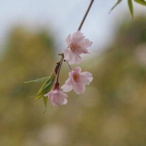 花のある風景@2020/04/11 。。。