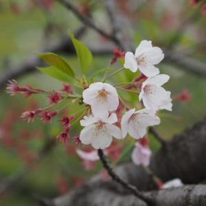 花のある風景@2020/04/18 。。。
