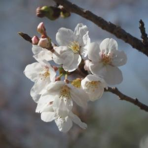 花のある風景@2021/03/20 。。。