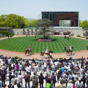 京都競馬場が得意な人、アドバイス下さい!