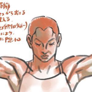 線画化024:腕上げ・正面:僧帽筋、三角筋、大胸筋、上腕の様子:52分