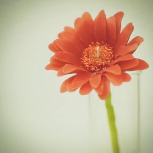 今後の活動予定。年末年始もキャンドル好きさん&お花好きさんと一緒!