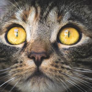 シュレディンガーの猫(続)