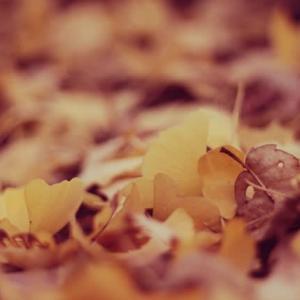 黄色い絨毯。