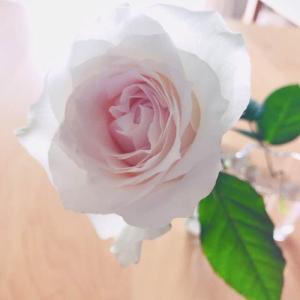 鏡の中の薔薇。