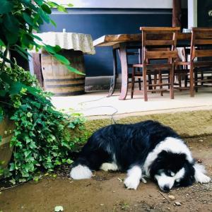 ワイナリーのブランチと眠る犬。