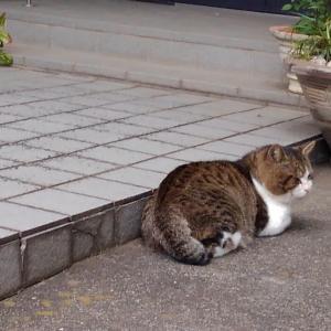 野良猫の安住の地となるように