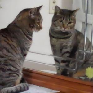鏡よ、鏡・・・、美しいのは?