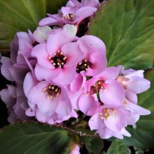 暖冬で梅の開花が早いです。