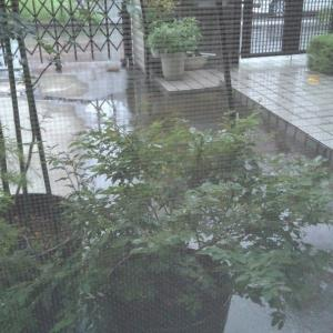 雨が降りしきる中を