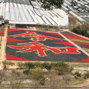 日本最大級の、サルビアの花花絵~世良ゆり園~