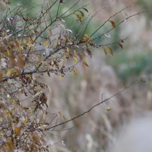 渡良瀬鳥景①【曇】