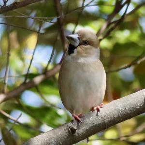 散歩道の野鳥達