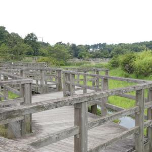 綾瀬市蟹ケ谷公園