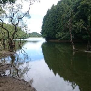 糸島 雷山 不動池の中から突き出しているのが「木」か「スケキヨ(犬神家)の足」かわからなくなってしまう