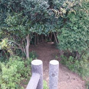 糸島のトトロの森を散策して海辺の大祖神社でパワーチャージ 近くで海鮮やおしゃれなカフェにジェラートもおすすめ