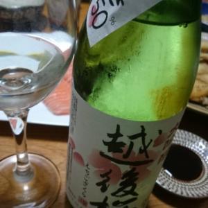 越後桜 ワイングラスでおいしい日本酒アワード2019金賞(通算7回)を飲んでみた【本日のお酒/日本酒】