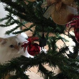 もうすぐクリスマス~☆