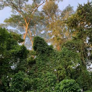 ジャングル散歩