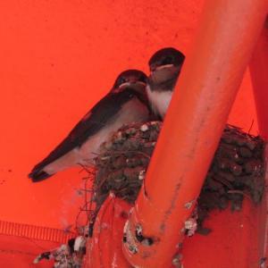 新しい巣が見つかりました