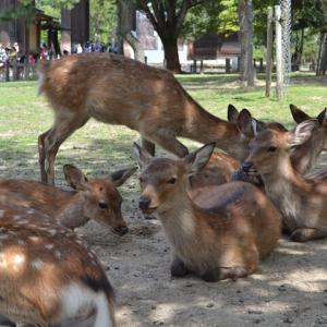 奈良の鹿は神獣であった・・・