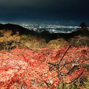 雨続きですね〜【紅葉狩りの巻】