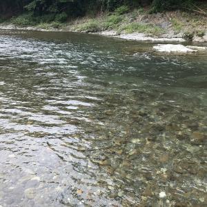 秋川釣行 まだまだイケる?