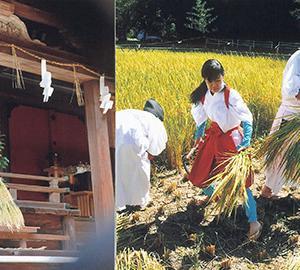 住吉神社の御田刈祭