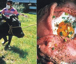 見蘭牛とやまぐち和牛