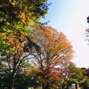 ◆ 紅葉の季節になりました ◆
