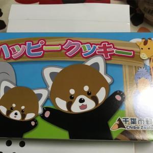 千葉市動物公園 ハッピー クッキーだよ