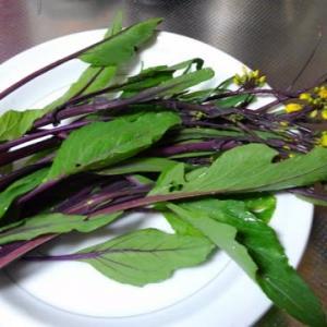 0118夕食:(家人作)紅菜苔 と (ワタシ作)鶏手羽元