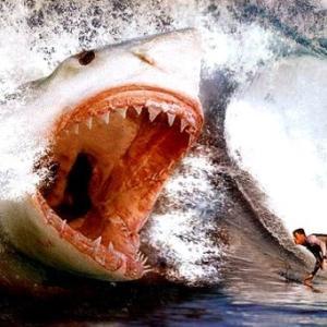 【コロナでもサーフィンしてます】NSW州北部海岸でサーファー、サメに襲われ死亡