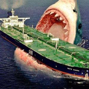 豪のサメによる死者7人に、86年ぶりの多さ 気候変動が影響か