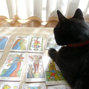 黒猫とタロット