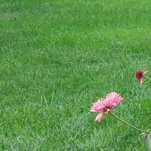 9月24日「平和の天使」の日:9大天使のメッセージ