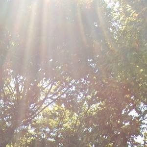 7月25日「滋養の天使」の日:9大天使のメッセージ