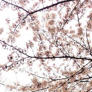 """3月23日:""""3.発展の天使""""からのメッセージ"""