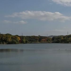 秋のお散歩